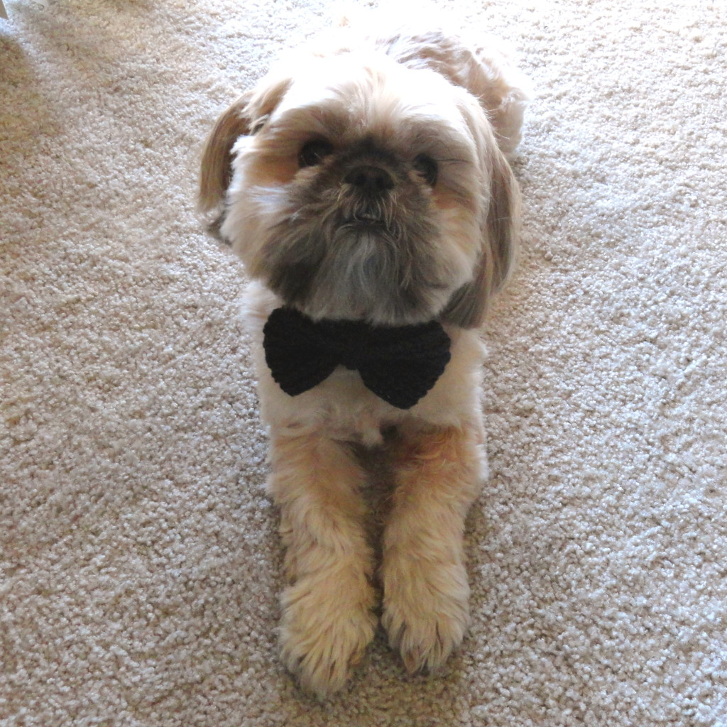 Buster wearing bowtie